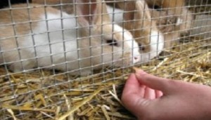 Rabbit and cat enclosures constructed with stainless steel mesh